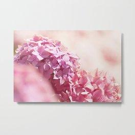 Dreamy pink hydrangea - Flower - Floral Metal Print