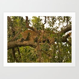 Leopard Mother Art Print