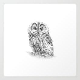 The Tawny owl Art Print