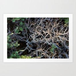 Mountains Sagebrush Art Print