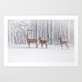 Winter Visits Art Print