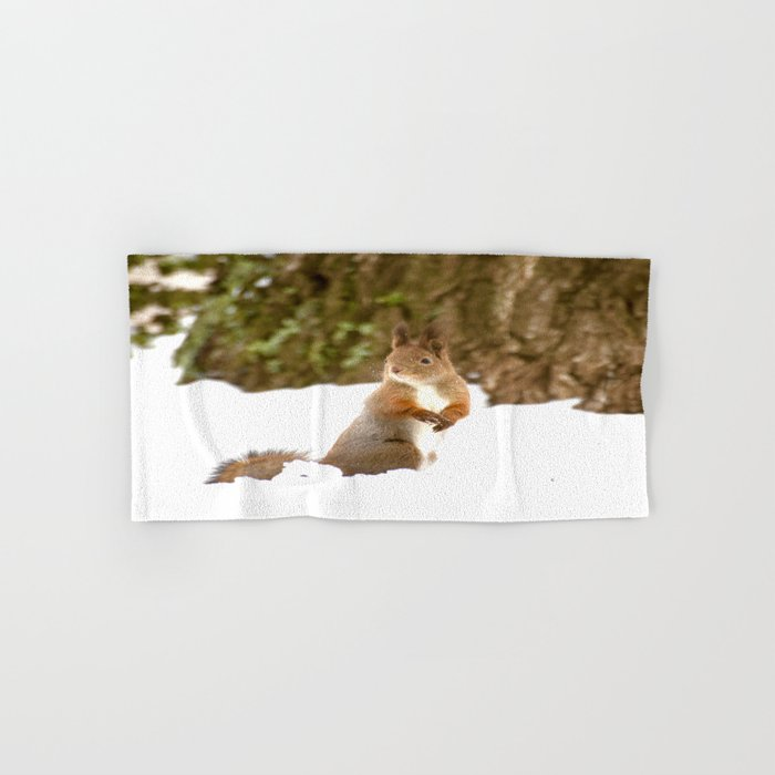 Cute Squirrel In The Forest Hand & Bath Towel