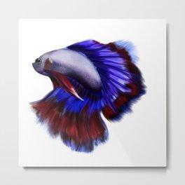 Beautiful betta fish Metal Print