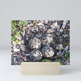 Killdeer eggs in nest Mini Art Print