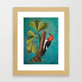 Red Headed Woodpecker with Oak, Natural History and Botanical collage Framed Art Print