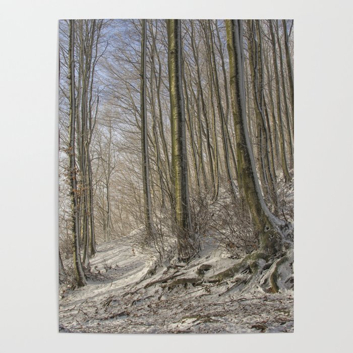 THE ENCHANTED WOOD Poster