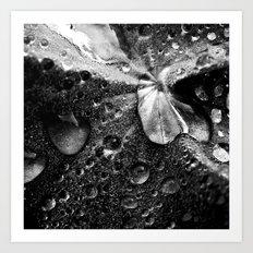 water drops XVII Art Print