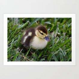 Daisy's Duckling Art Print