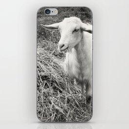 Goat Square iPhone Skin