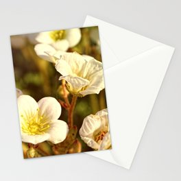 Peaceful Stationery Cards
