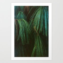 Long Pine Needle Detail Art Print