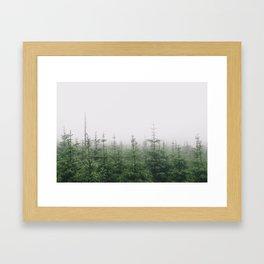 Pine Framed Art Print