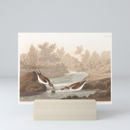 Little Sandpiper by John Audubon Mini Art Print