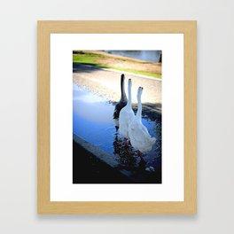 Beautiful Geese Framed Art Print