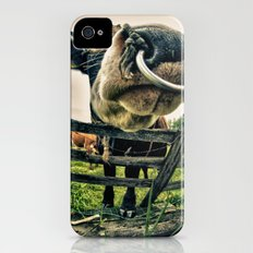 Holy cow its a bull iPhone (4, 4s) Slim Case