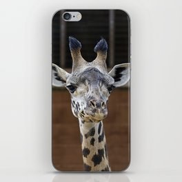 The Giraffe iPhone Skin
