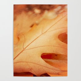 AFE Autumn Leaves, Nature Photography Poster