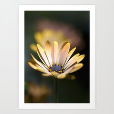 daisies in a row. Art Print