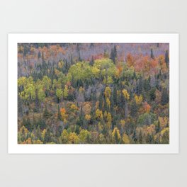 Detail of Peak Fall Colors in Northern Minnesota Art Print