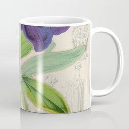 Meconopsis Simplicifolia Vintage Botanical Floral Flower Plant Scientific Coffee Mug