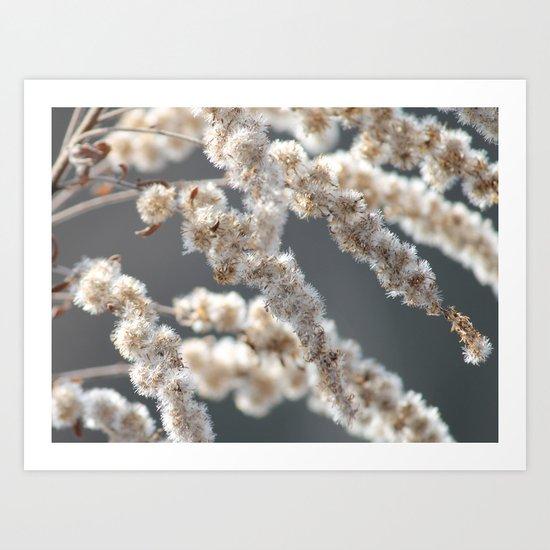 Winter Plant Art Print