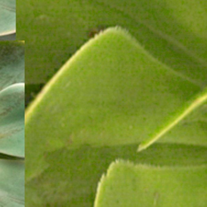 COLLAGE GRAY-GREEN  SUCCULENTS  MODERN DESIGN Leggings