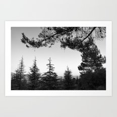 Sunset. Into the woods BW Art Print
