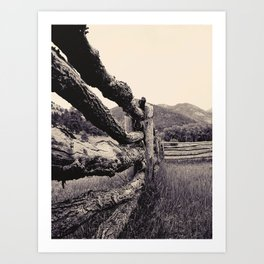 Colorado, fence, b&w Art Print