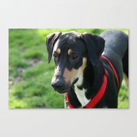 doberman Canvas Prints featuring Doberman by Ornithology