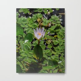 Tropical Water Lily Flower Nymphaea Daubenyana Metal Print