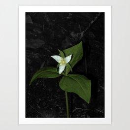 Forest Flower Art Print