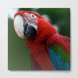 Close-Up Of A Green-Winged Macaw Metal Print