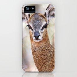 Klipspringer, Africa wildlife iPhone Case