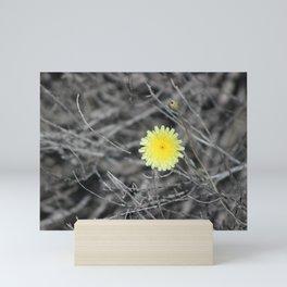 Lemon Yellow Desert Dandelion Coachella Preserve Selective Coloring Mini Art Print
