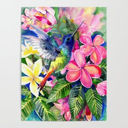 Hummingbird and Plumeria Florwers Tropical bright colored foliage floral Hawaiian Flowers Poster