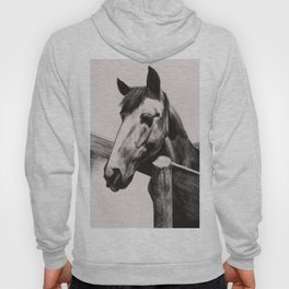 Horse Greeting A Stranger Hoody