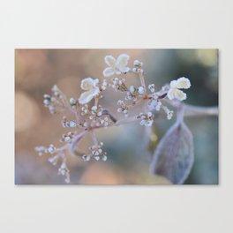 Frosty Viburnum Canvas Print