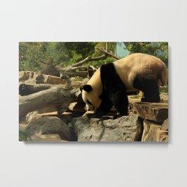 Panda-monium  Metal Print