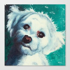 Maltese dog - Pelusa Canvas Print