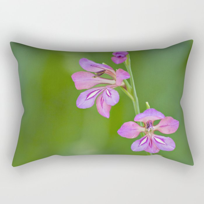 Beauty in nature, wildflower Gladiolus illyricus Rectangular Pillow