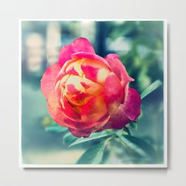 Multicolour Rose - Ektachrome photograph Metal Print