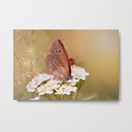 Ringlet brown butterfly Metal Print