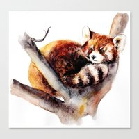 red panda Canvas Prints featuring Red Panda by Anna Shell