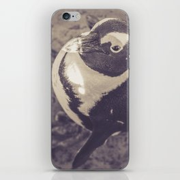 Adorable African Penguin Series 3 of 4 iPhone Skin