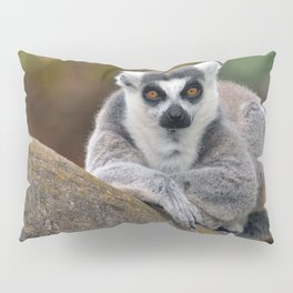 Ring-tailed Lemur Pillow Sham