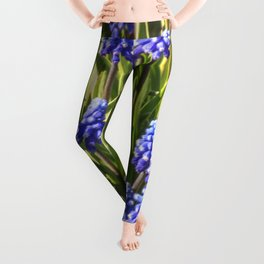 Grape hyacinths muscari Leggings