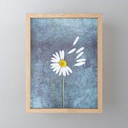 Daisy III Framed Mini Art Print