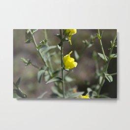 Yellow Snapdragon Metal Print