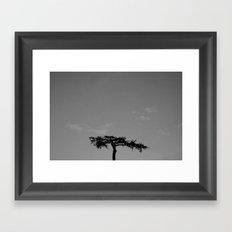 it seems like a bonsai Framed Art Print