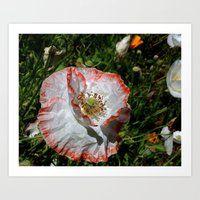 degas Art Prints featuring Degas' poppy by Bee in Eden